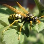 ČUDO ZVANO SODA BIKARBONA: Ako vas ubode osa, pčela, stršljen…