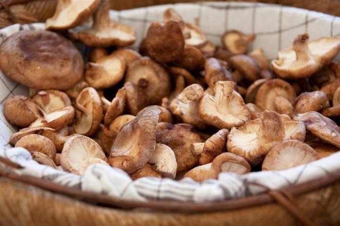 gljive-bp-700