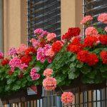 SAVJETI ZA LJUBITELJE CVIJEĆA: Kako svoje omiljene biljke sačuvati preko zime?