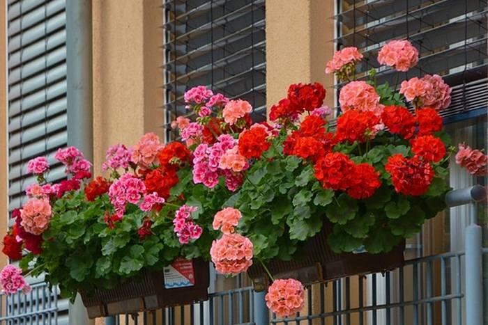 cvijece-prozor-bp-700