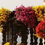 NAJBOLJI IZBOR: 5 nezahtjevnih balkonskih krasotica koje uspijevaju baš svima [FOTO]