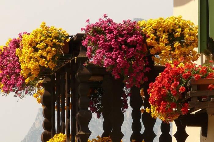 balkon - cvijeće