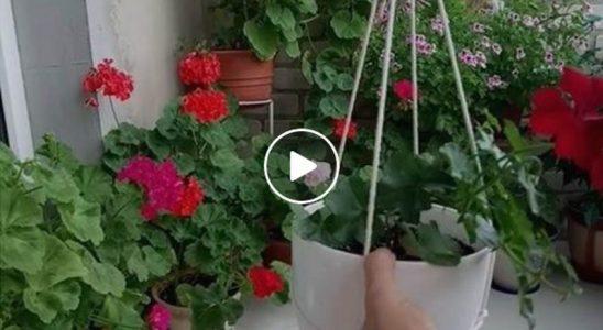 URADI SAM: Viseće tegle za cvijeće