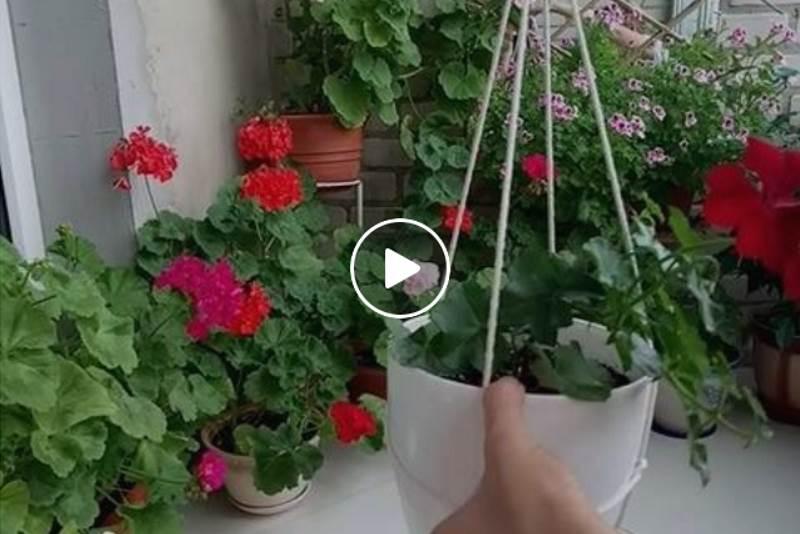 VISEĆE TEGLE ZA CVIJEĆE: Oduševit ćete se kad vidite kako ih je jednostavno napraviti [VIDEO]