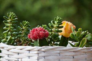 12 fantastičnih i jednostavnih ideja za uzgoj sukulenata [FOTO]
